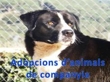 Adopció